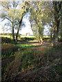 SP9850 : Empty pond by Philip Jeffrey