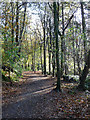 NY5259 : Footpath through Gelt Woods by Oliver Dixon