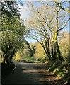 SX3868 : Lane, Ashton by Derek Harper