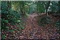 SX5557 : Park Lane No1 by jeff collins