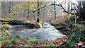 SO6112 : The Cannop Brook, 2 : Week 46