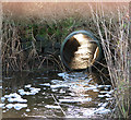 TG4200 : Culvert in the Norton Marshes : Week 49
