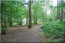 SE3158 : Harrogate Ringway, Bilton Beck wood by N Chadwick