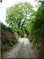 S4328 : Looking back down the track on the Kilmacoliver Loop Walk by Humphrey Bolton