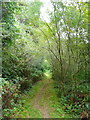 S4328 : Path through the plantation by Humphrey Bolton