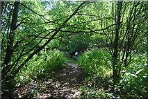 SE3258 : Harrogate Ringway, Nidd Gorge by N Chadwick