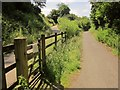 SX5185 : Paths near Lydford by Derek Harper