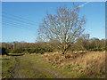 SU8459 : Yateley Common by Alan Hunt