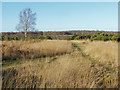 SU8458 : Lowland heath, Yateley Common by Alan Hunt