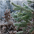 NH6353 : Frost beside Big Burn, Shantullich Wood : Week 52