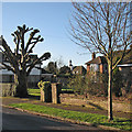 TL4360 : Winter sunlight, Woodlark Road by John Sutton