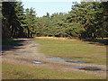 SU9157 : Woods near Porridgepot Hill by Alan Hunt