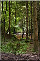 NY7961 : River Allen through the trees by Christopher Hilton