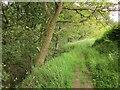 SE0527 : Footpath beside Ramsden Wood by Derek Harper