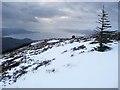 NN0464 : SW ridge of Beinn na Gucaig : Week 4