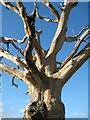 SO8844 : Dead tree : Week 5