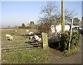 ST6758 : Public sheep path by Neil Owen