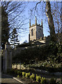 ST6658 : St Mary's in Spring sunshine by Neil Owen