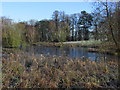 SJ8777 : Frozen pond, N side of Hare Hill NT, Over Alderley by Colin Park