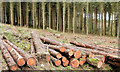 J4577 : Felled trees, Cairn Wood, Craigantlet - February 2015(6) by Albert Bridge