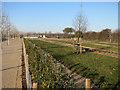 TL4258 : Planted area, West Cambridge site by Hugh Venables