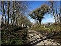 SX2974 : Lane near Uphill by Derek Harper