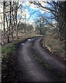 SJ8180 : Track near Saltersley Hall Farm by David Dixon