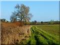 SP8117 : Farmland, Weedon by Andrew Smith