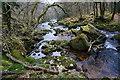 SX5464 : River Plym, looking downstream : Week 10