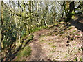SE0722 : Path in North Dean Wood by Humphrey Bolton