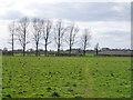 SP7030 : Trees across a field by Robin Webster