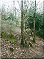 SE0722 : Eastern end of the path through the western part of North Dean Wood by Humphrey Bolton