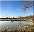 SP6919 : Pond at Brick Kiln Farm by Des Blenkinsopp