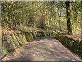 SD6527 : Woodland Path, Witton Country Park by David Dixon