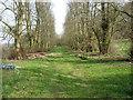 SU9294 : Avenue leading to Pennstreet Farm by David Purchase