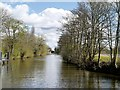 SU9777 : River Thames, Downstream from Romney Lock by David Dixon