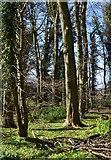 SU7989 : Spring Sunshine, Parmoor, Buckinghamshire by Oswald Bertram