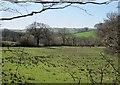 SX3579 : Field by Homepool Plantation by Derek Harper