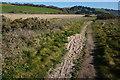 SX8344 : Southwest Coast Path by jeff collins