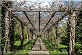 TQ2997 : Wisteria Arch, Trent Park, London N14 by Christine Matthews