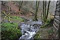 SX5160 : Stream below Riverford Viaduct by N Chadwick