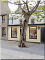 HY4411 : The Big Tree, Kirkwall by Oliver Dixon