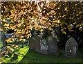 SP0943 : Graveyard, Bretforton, Worcs : Week 19