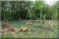 TQ4670 : Clearing in Little Wood by Des Blenkinsopp