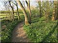 TL3558 : Hardwick Wood by Hugh Venables