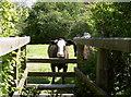 ST5865 : 'We can't cross the bridge!' by Neil Owen