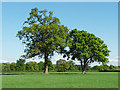 SU9071 : Farmland near WInkfield by Alan Hunt
