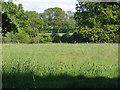 SU9072 : Fields near Winkfield by Alan Hunt