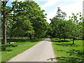 TQ0082 : Avenue of trees on drive, Langley Park by David Hawgood