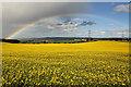 NT7954 : Oilseed rape at Rulesmains : Week 21